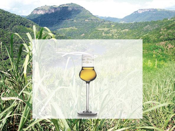 Análise Sensorial | Casa Bucco - Destilados Artesanais